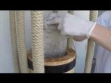 Сыродавленное кедровое масло холодного отжима от SINITSA-ECO.RU
