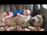 Собаки ЗАЩИЩАЮТ детей - Дети и собаки лучшие друзья.