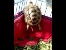 Моя черепаха Василиса - гимнастка
