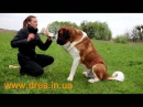 пес тянет поводок как решить проблему отучаем пошагово тянуть поводок
