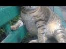 Очень толстый кот сидит на лавочке
