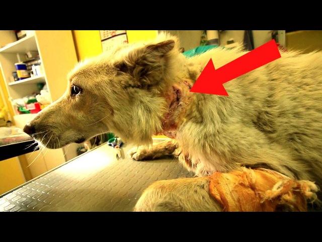 Собаку чуть не загрызли Спасаем Кормлю бездомных
