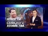 КВН: Плохая компания - Мы из Красноярска (1/2, 2015)
