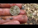 Коп монет.По следам старого поселения.В поисках старины №31.