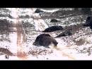 Охота на кабана Меткая стрельба