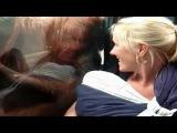 Орангутанг обратил внимание на малыша