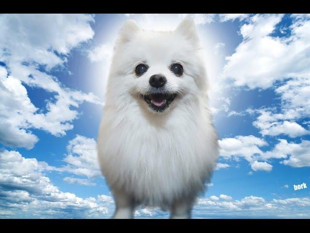 GABE THE DOG SINGS NARUTO SOUNDTRACK!