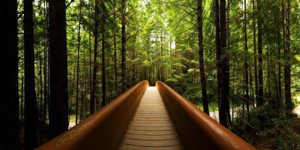 Национальный парк Редвудс