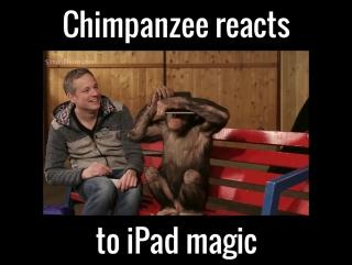 Chimp Reacts To Magic Tricks
