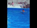 Плавание с дельфинами ???
