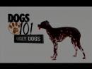 Введение в собаковедение 101 Dogs Часть 17 Animal Planet 1
