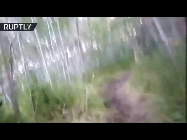 Американец и русский при встрече с медведем