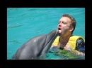 Почему дельфины спасают тонущих людей