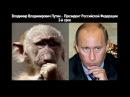 Смешное прикольное видео до слез 2017