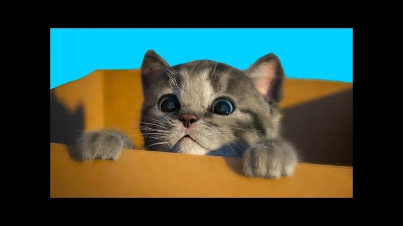 МОЙ Маленький КОТЕНОК СИМУЛЯТОР котика виртуальный питомец как мультик видео д ...