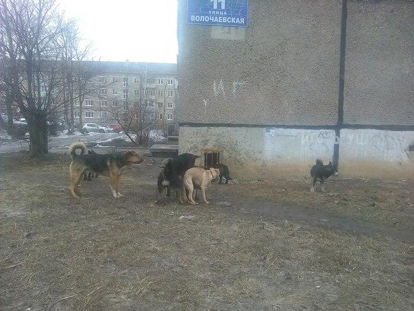Собачки. Те самые, об отстреле которых переживали ранее. Здравы, бодры