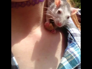 крыса ест сухарик