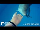 Большой Сочинский Дельфинарий в парке РИВЬЕРА