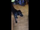 Чокнутая собака