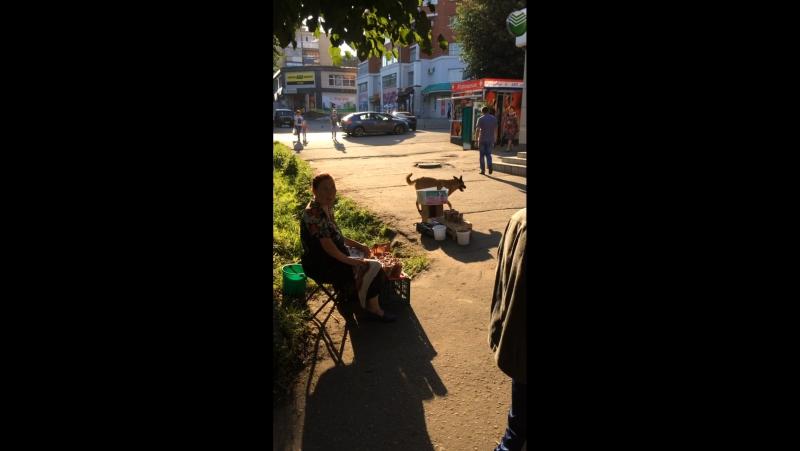 Бродячие собаки в центре города