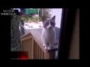Кот кричит аллах акбар!.mp4