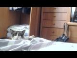 Смешная реакция кота)))