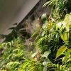 Вертикальное озеленение   Фитостены   Фитодизайн