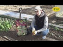 Видео-инструкция: посадка клубники с использованием грунта ФАСКО