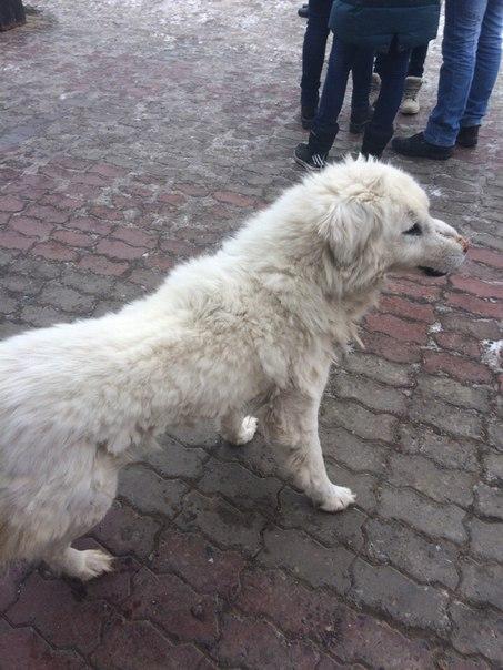 Пожалуйста, срочно!!! Если увидите эту собаку на Сопке, то позвоните м