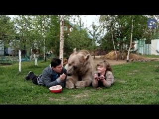 Русская семья приютила и вырастила бурого медведя по кличке Степан