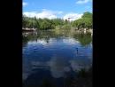 Кормили прожорливых чаек. Они так красиво летят в замедленной съемке 😱 Каждый раз любуюсь и хочется снова побывать в этом парке