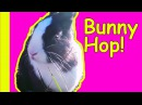 Bunny Hop Dance Songs for Kids and Children English Nursery Rhymes by Patty Shukla