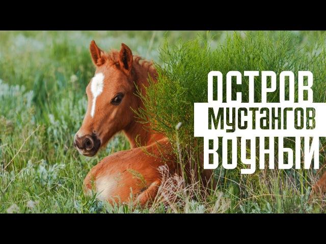 Остров Водный территория мустангов Дикие лошади озера Маныч Гудило