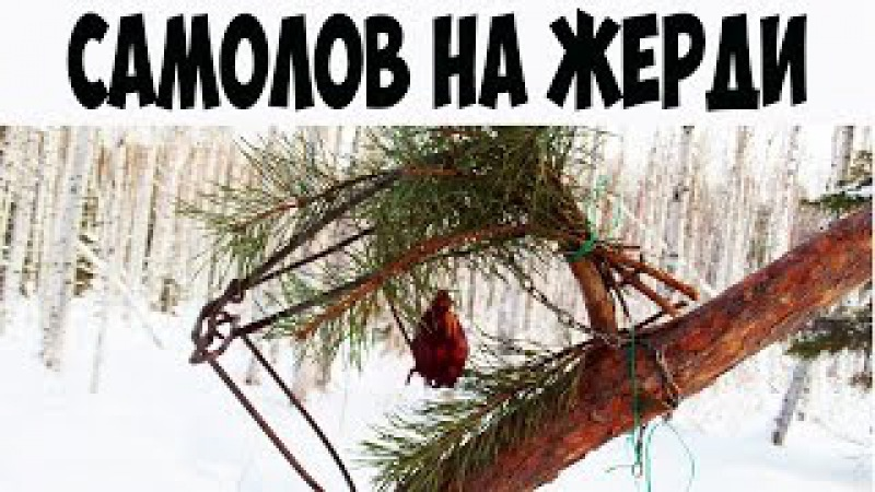 На куницу и соболя капканами | установка кулемки на наклонной жерди I Marten trapping in Ru...