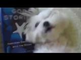 Как_чихают_разные_животные