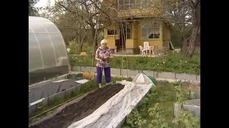 Огород без хлопот. Галина Кизима.