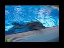 Выступление в новосибирском дельфинарии (2А PRODUCTION )