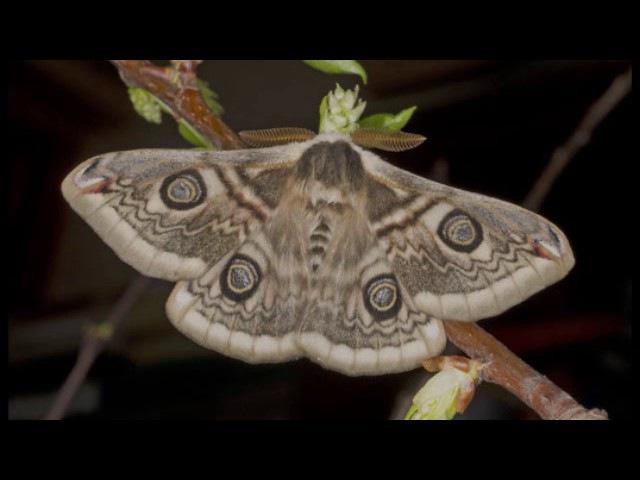 Насекомые: покровительственная окраска и мимикрия (рассказывает энтомолог Андрей Маталин)