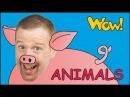Farm Animals for Kids MORE | Steve and Maggie with Animals | English Stories from Wow English TV