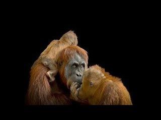 National Geographic Дикий Запад Ровно в полдень. Документальный фильм про животных.