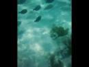 подводный мир красного моря нашими глазами)Египет 2017
