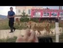 Дагестанец выгуливает льва на поводке