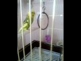 мой попугай!