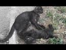 2 - Кошка Нюся играет с котёнком! 152