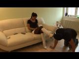 Foot worship Licking boots #foot #fetish #slave #femdom #mistress #bdsm #neylon