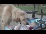 Приколы с детьми и животными - Приколы про детей с животными