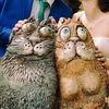 свадьба свадебный фотограф в Обнинске Андрей Ш