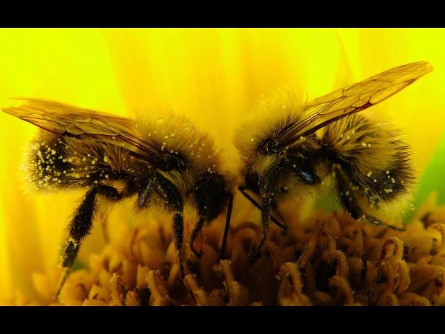 Селекция медоносной пчелы. Пчеловодство.Пасека.