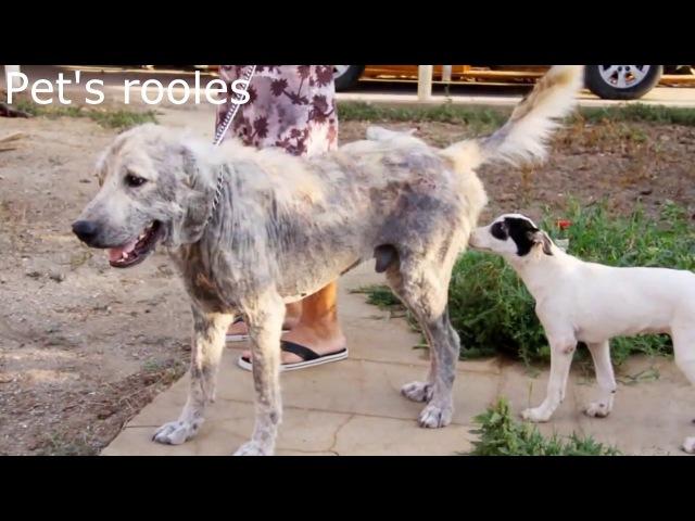 Спасение бездомных собак. Брошенные любимцы.