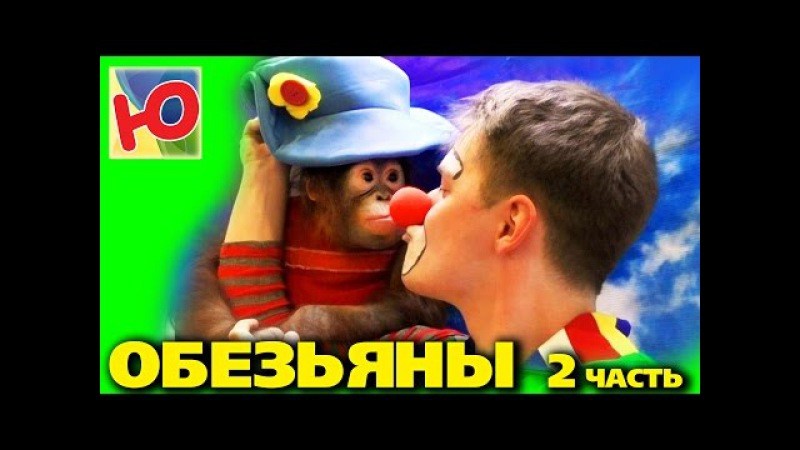 Макс, Вовка и клоун Абик на выставке обезьян в Вестер-Гипере. Часть 2 Обезьяна Дана. Юмиксики.